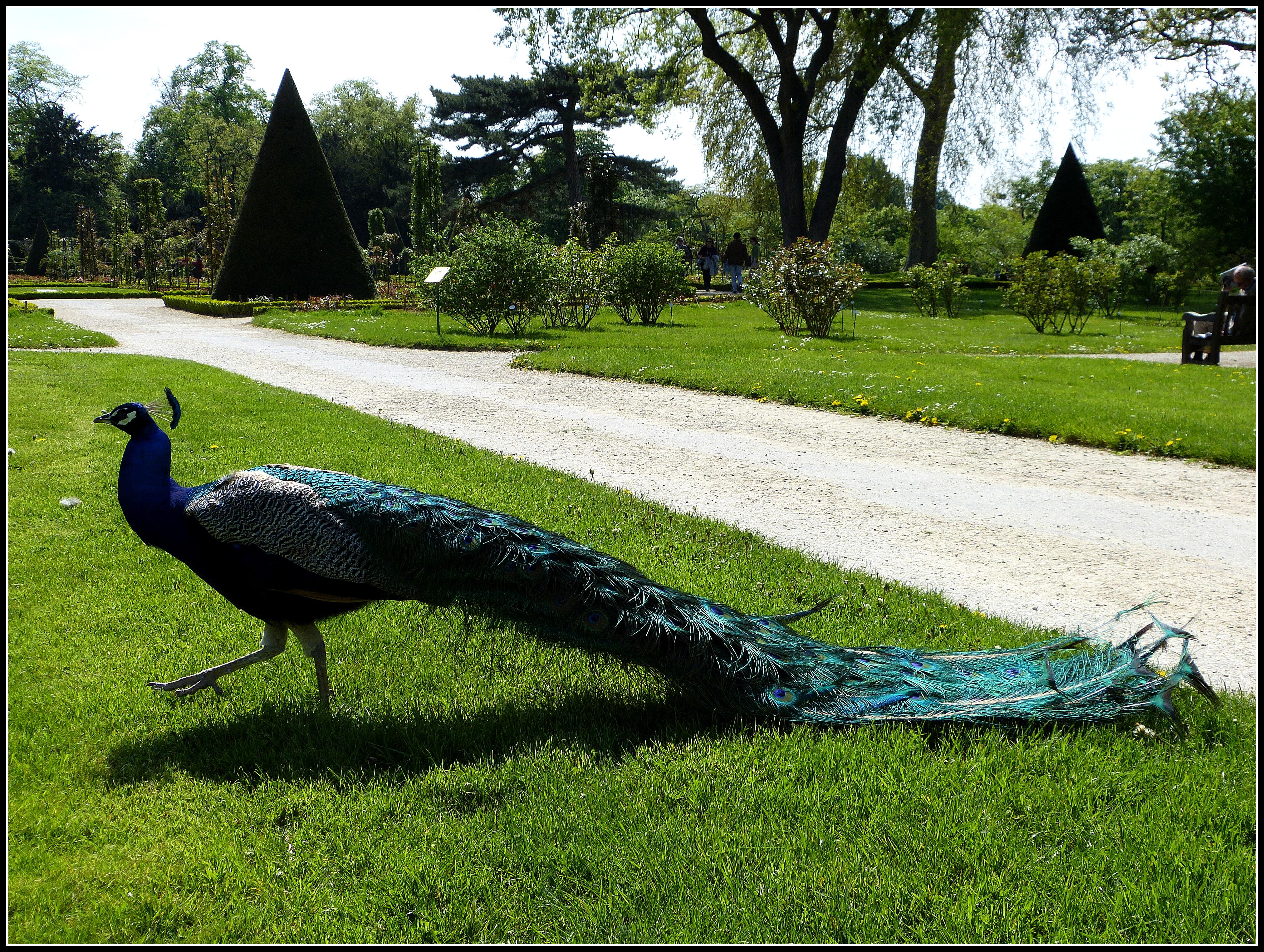 Les jardins de bagatelle japanalex for Bagatelle jardin